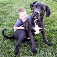 Lost Dog - Male - Saint Henry, OH, USA 45883