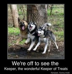 German Shepard, Alaskan Malamute, and Siberian Husky. My future dogs! Funny Animals With Captions, Funny Animal Memes, Cute Funny Animals, Animal Quotes, Funny Animal Pictures, Funny Cute, Funny Shit, Funny Dogs, Funny Memes