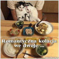 Romantyczna kolacja we dwoje... #kotki #śmieszne #kolacja