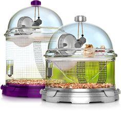 10 Classroom Pets Ideas Classroom Pets Classroom Class Pet