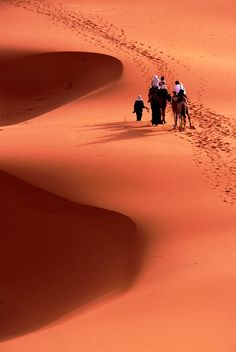 Camel riding tourists taking early morning ride among Saharan dunes Morocco Doug McKinlay Lonely Planet Photographer © Copyright Lonely Planet Images 2011 Desert Dream, Desert Life, Desert Sahara, Deserts Of The World, Le Havre, Lonely Planet, Wonders Of The World, Places To See, Beautiful Places