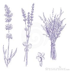 Lavender pencil drawing set