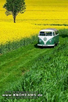 Split Window VW Bus Green on Green on Yellow   Volkswagen Bus