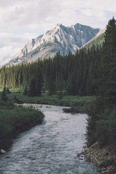 nature, mountains, and forest Bild