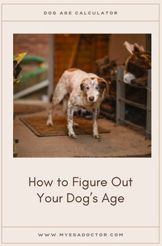 Find Dog's age Age Calculator, Emotional Support Animal, Dog Ages, Your Dog, Dogs, Animals, Animales, Animaux, Pet Dogs