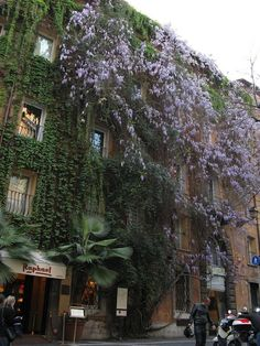 The Original Vertical Garden: Hotel Raphael in Rome (Been there!)Fabuloous hotel, Piazza Navona, 1996 I think. Don't remember any greener on the building.  Ooooh the rooftop terrace is incredibe, we dined there.