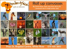 Roll up canvases are convenient and easy to transport. Get your roll-up canvases on the go at Amber Africa (Sizes vary from A5 to A1 , postcard size to large poster size) we also stock a wide range of souvenirs and gifts. Visit our website for more information.