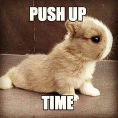 When is push up time? Every time is push up time!! #rabbit #bunny #bunnies #cuteanimals #pets