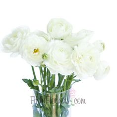 White ranunculus ranunculus white ranunculus and wedding white ranunculus fresh flower september to may delivery mightylinksfo