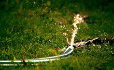 #blur #blurry #burst #close up #depth of field #droplets #focus #grass #hose #leaves #plants #splash #water #water drops #water splash