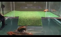 sliders first visit to acrylic above tank basking platform part three