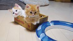 Pretty Kittens Cats Cat Lovers Kittens Kitten Lovers Cat Videos Kitten Videos Cute Cat Videos Cute K Cute Funny Animals, Cute Baby Animals, Animals And Pets, Funny Cats, Easy Animals, Fun Funny, Cute Kitten Gif, Cute Kittens, Cats And Kittens