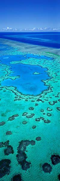 Living Jewel, Heart Reef, Qld - Ken Duncan Panographs