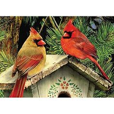 DIY 5D Diamond Painting Kits for Adults Full Drill Diamond Dotz Painting Crystal Diamond Arts Crafts for Home Wall Decor North American Cardinals 16 x 12 in