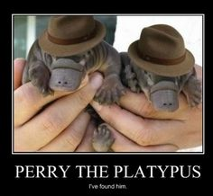 Perry-the-platypus.jpg (499×462)