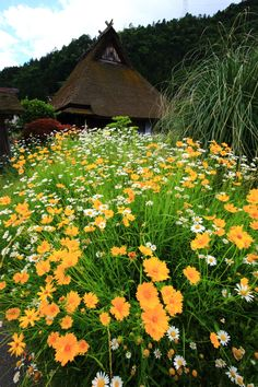 華やかな花につつまれた京都の昔話の町の美山町