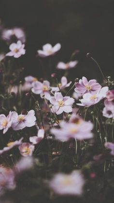 drxgonfly:Soft pink anemone florals (by Annie Spratt) Wallpaper HD Wallpaper Nature Flowers, Beautiful Flowers Wallpapers, Flower Wallpaper, Cool Wallpaper, Cute Wallpapers, Iphone Wallpapers, Floral Wallpapers, Iphone Wallpaper Preppy, Nature Iphone Wallpaper