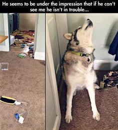 You Will Be Wowed With These 41 #Funny #Dog #Pics