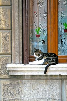 Cat on windowsill in Venice, Italy
