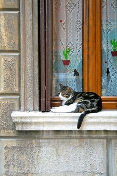 Cat on windowsill in Venice, Italy