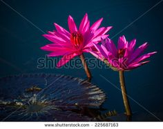 Flower images free stock photos download (10,840 Free stock photos) for commercial use. format: HD high resolution jpg images page (23/286)