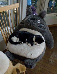 A cat and his Totoro bed