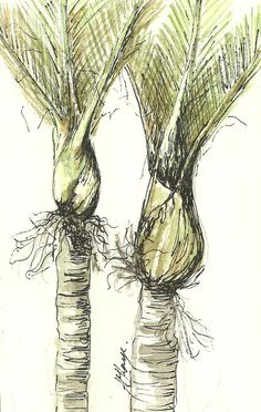 Pen and ink: Nikau palms - not a quilt but inspiration for thread painting Tree Tatto, Bee Hives Boxes, Palm Tattoos, Tree Sketches, Nz Art, Kiwiana, Plant Drawing, Thread Painting, Botanical Drawings