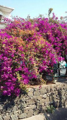 Flores de Água de São Pedro