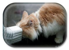 Heat stroke prevention for your indoor and outdoor cats