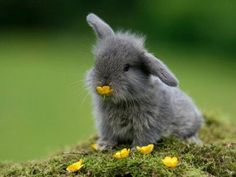 ahhh!! makes me want a bunny instead of a puppy...