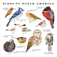 BIRDS OF NORTH AMERICA PRINT BY SMALL ADVENTURE