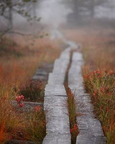 .A wooden pathway -Where does it lead?