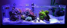 Marine Fish Tanks, Marine Tank, Saltwater Tank, Saltwater Aquarium, Reef Tanks, Nano Tank, Reef Aquarium, Shallow, Room Inspiration