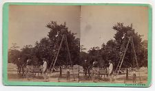 Orange City Florida Stereoview By MM & WH Gardner of Atlanta Georgia #1