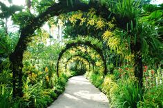 National Orchid Garden - Featured on RueBaRue, the world's largest orchid garden, a 7-acre feast of 60,000 velvety plants encompassing 1,000 species and a jaw-dropping 2,000 hybrids, a garden specialty.