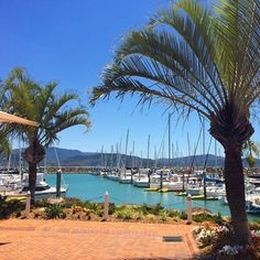 Glamour day down at the marina today! Very jealous of all the charterers who are out on our boats right now (almost every single boat is out this week!) #whitsundayescape #lovewhitsundays #abellpointmarina #sailing #marina