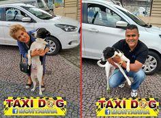 TAXI DOG MONTANHA TRANSPORTE DE ANIMAIS NO RIO DE JANEIRO: HOJE É DIA DE CASTRAÇÃO