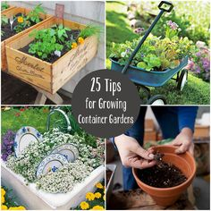 They have some  VERY cool ideas for container gardens in here, and some pretty good advice with solid links.  25 Tips & Tricks for Growing Container Gardens