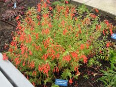A Walk in the Park. Waterwise plants you might want to try.