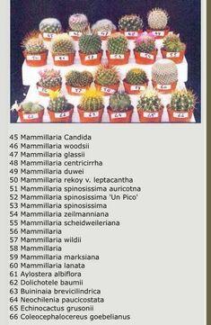 Succulent Planter Diy, Succulent Gardening, Planting Succulents, Types Of Succulents Plants, Succulents In Containers, Cactus House Plants, Terrarium Plants, Mini Cactus, Cactus Flower