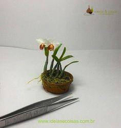 Ideas & Things - art thumbnails: miniature orchids / miniature orchid