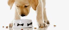 Como educar un perro   como educar a un cachorro: 50 consejos para educar a tu cachorro