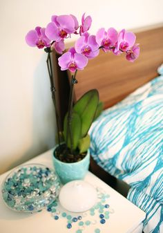 129 best Orchid Style & Decor images on Pinterest | Lily, Orchid and Orchid Bright Kitchen Ideas on bright home ideas, bright business ideas, rv parking ideas, bright colorful kitchen cabinets, bright painting ideas, bright kitchen colors, bright hallway ideas, bright light in face, vaulted ceilings ideas, bright porch ideas, bright kitchen schemes, bright painted kitchen cabinets, bright blue kitchen, bright sunroom ideas, bright kitchen backsplash, bright red backsplash, bright traditional kitchen, bright kitchen art, bright kitchen themes, bright garden ideas,