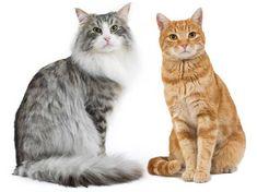 Risultati immagini per gatto
