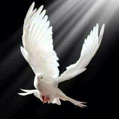 Phoenix Images, Pigeon Breeds, Calligraphy Tattoo, Dove Bird, Good Luck To You, Angel Art, Vanitas, Love Symbols, Pencil Art
