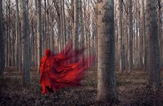 Little Red Riding Hood Dark Photography, Night Photography, Photography Ideas, Hand Pictures, Rose Trees, Fairytale Art, Red Aesthetic, Red Riding Hood, Little Red