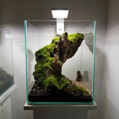 Aquaman Nature Studio 29x29x35cm New glued hardscape.
