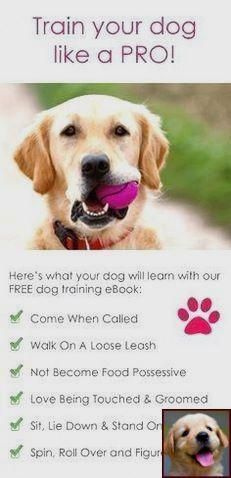 Dog Behavior Modification Classes And Dog Training Courses Toronto