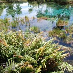 Pupu Springs Reflection, Golden Bay, New Zealand Royalty Free Stock Photo Bay News, Image Now, Nature Photos, Simply Beautiful, New Zealand, Reflection, Royalty Free Stock Photos, Plants, Photography