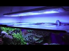Giesemann Futura LED Aquarium Fixture.  Complete control with your pc, notebook tablet, or smart phone.